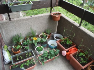 Our balcony garden is turning out great! :)