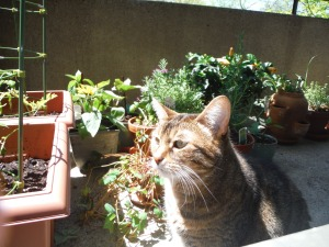 Cat enjoying the plants and sun.
