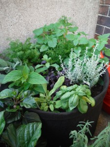 We planted a mix of herbs and herbal teas to have a dense foliage to help with the humidity level. So far, so good.