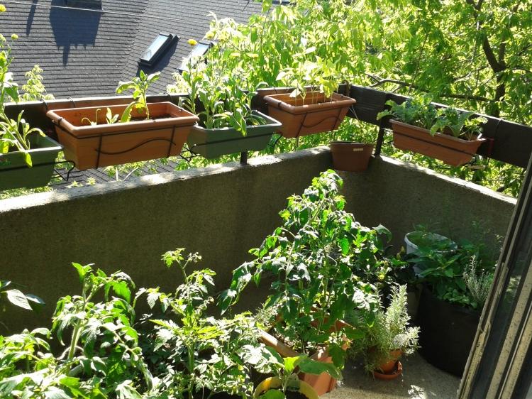 Our happy garden!