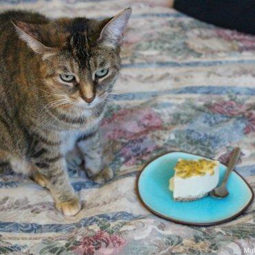 coconut-cheese-cake4