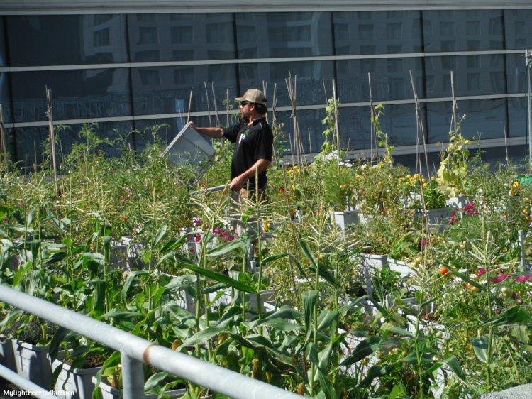 urban-agriculture5.jpg