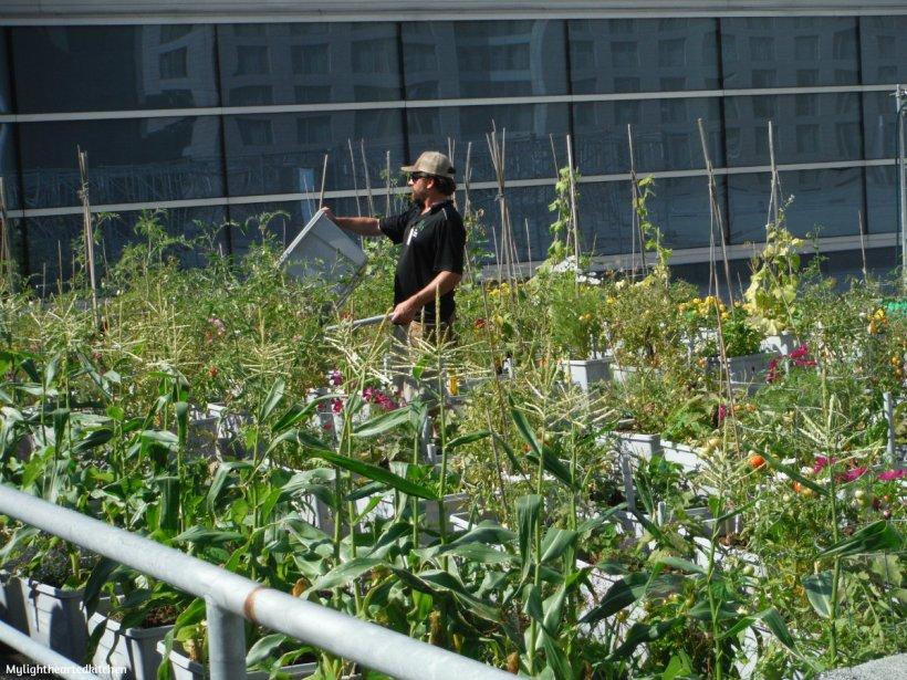 urban-agriculture5